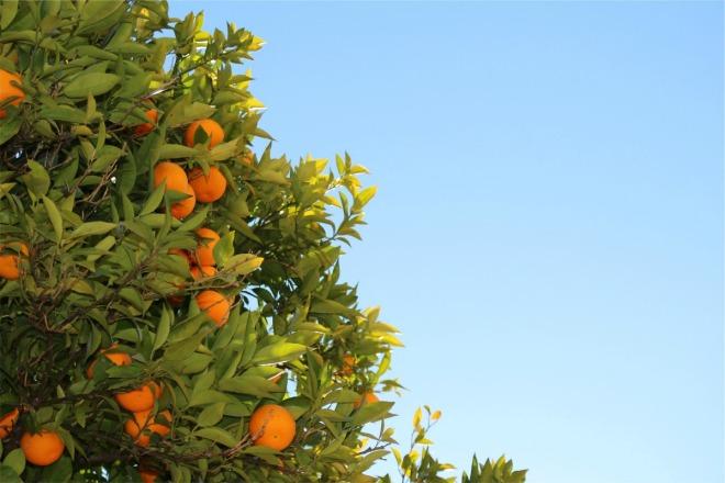 Unsplash-Oranges