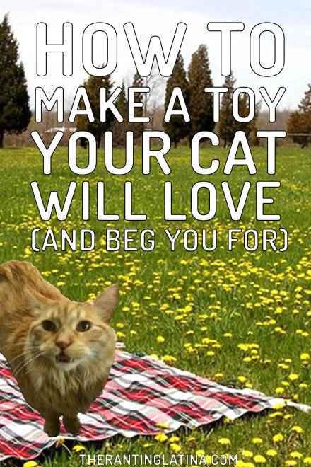 How to Make A Toy Your Cat Will Love And Beg You For!